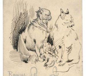 Koty Norwida