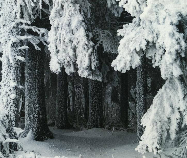 Zimowa baśń